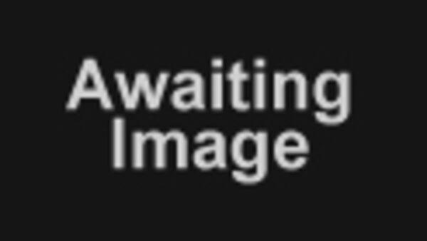 SPECIAL EDITION Golden Eagle Wrangler